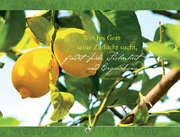 """Faltkarte """"Wer bei Gott seine Zuflucht sucht ..."""" - 5 Stück"""